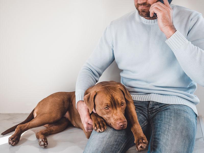 Man phoning a vet in Whangarei